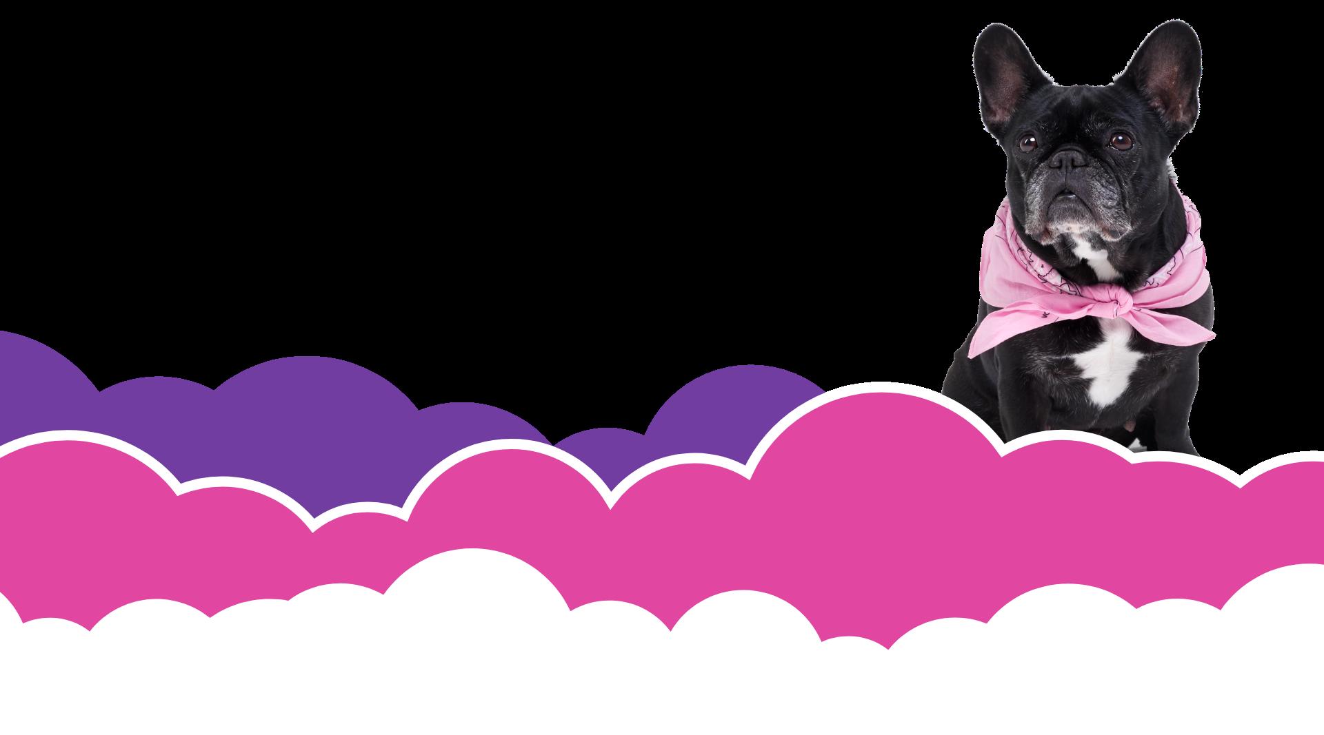 Wölkchen Werbematerial: Abgebildet sind stilisierte Wolken in den Farben der Firma, sowie ein süßer Hund mit rosanem Halsband.